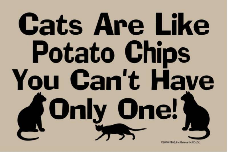 217 Cats Are Like Pota...